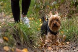 Tranh cãi quy định buộc người dân dắt chó đi dạo 2 lần mỗi ngày tại Đức