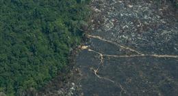 Nguy cơ rừng nhiệt đới Amazon trở thành thảo nguyên vì nạn phá rừng