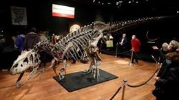 Đấu giá bộ xương khủng long 150 triệu năm tuổi