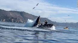 Cá voi lưng gù khổng lồ suýt nuốt chửng hai người chèo thuyền ở Mỹ
