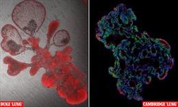 Phổi nhân tạo – đột phá trong nghiên cứu về virus SARS-CoV-2