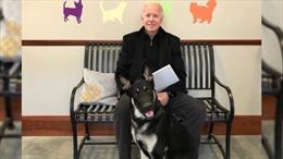 Những chú cún cưng trở lại Nhà Trắng