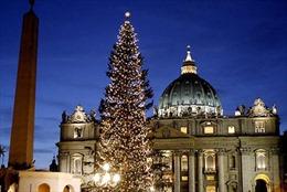 Vatican thắp sáng cây thông Noel