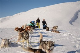 Cuộc đua quyết liệt của hàng trăm chú chó kéo xe trượt tuyết tại dãy Alps