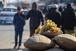 Độc đáo cách bảo quản hoa quả luôn tươi ngon suốt nửa năm tại Afghanistan