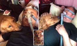 Chú chó luôn túc trực bên giường bệnh mỗi khi chủ nhân đeo máy thở