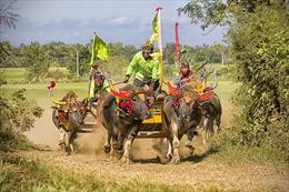 Lễ hội đua trâu trong văn hóa các quốc gia Đông Nam Á