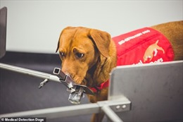 Tham vọng chế tạo mũi robot 'đánh hơi' bệnh ung thư giỏi như chó