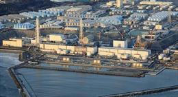 Nhật Bản phát hiện cá nhiễm phóng xạ tại tỉnh Fukushima