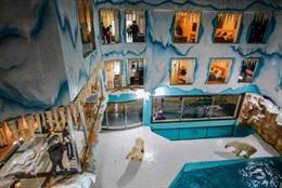 Khách sạn Trung Quốc bị chỉ trích dữ dội vì nuôi gấu Bắc Cực