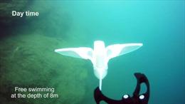 Trung Quốc phát triển robot thân mềm thám hiểm đại dương