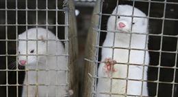 Nga đăng ký vaccine COVID-19 đầu tiên cho động vật