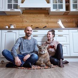 Cặp đôi người Nga nuôi sư tử núi như thú cưng trong nhà