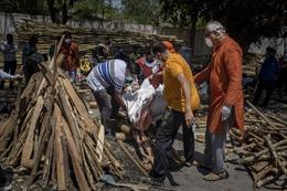 Ấn Độ phải chặt cây trong công viên lấy củi hỏa táng bệnh nhân COVID-19