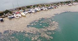 Chất nhầy bất thường bao phủ bờ biển Thổ Nhĩ Kỳ