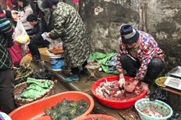 47.000 động vật hoang dã được bán tại chợ Vũ Hán trước khi COVID-19 bùng phát