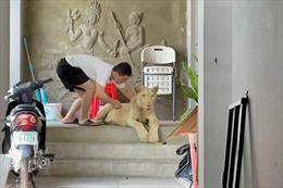 Nuôi sư tử làm thú cưng trong nhà ở Campuchia