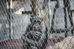 Người phụ nữ bị cấm đến sở thú vì có quan hệ tình cảm với tinh tinh