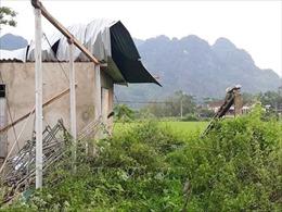 Lốc xoáy làm tốc mái nhiều nhà dân ở Nghệ An