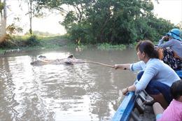 Lợn bệnh chết bị vứt trôi sông, nguy cơ lây lan dịch bệnh ở Bến Tre