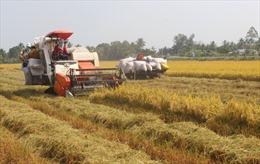 Long An phát triển vùng trồng lúa chất lượng cao