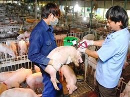 Bộ Nông nghiệp cử các đoàn đi dập dịch lở mồm long móng ở lợn trước Tết