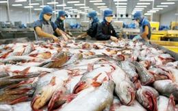 Cơ hội bứt phá cho xuất khẩu cá tra - Bài 1: Lần đầu vượt mốc 2 tỷ USD