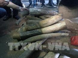 Kháng nghị việc áp dụng án treo trong vụ án mua bán 17 kg ngà voi