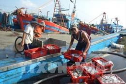 Tàu nhỏ  khai thác ven bờ gia tăng hằng năm, nguồn lợi thủy sản cạn kiệt trông thấy