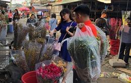 Giá hoa không tăng nhiều, người mua xúm xít chọn layơn, violet