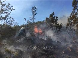 Nhiều vụ cháy rừng xảy ra ở huyện Trạm Tấu (Yên Bái)