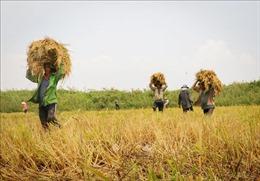 Xuất khẩu gạo giảm mạnh trong tháng 1/2019