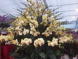 Ngắm hoa lan trên gỗ lũa khoe sắc tại hội chợ xuân