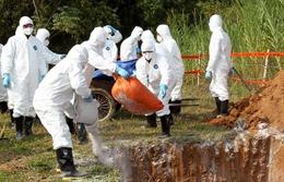 Bộ Nông nghiệp gửi công điện khẩn chống dịch tả lợn châu Phi
