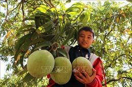 'Giấy thông hành' và câu chuyện xuất khẩu trái cây