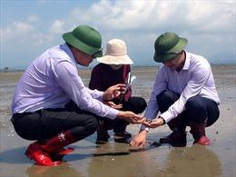 Ngao chết tại Quảng Ninh do mật độ nuôi quá dày, nước thiếu ô xy và tảo