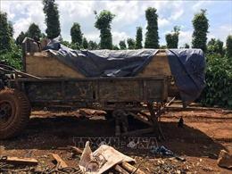 Phát hiện vụ vận chuyển gỗ không rõ nguồn gốc, có dấu hiệu khai thác trái phép