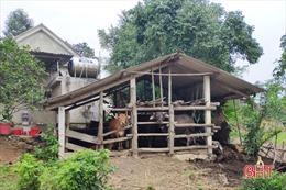 Dịch lở mồm long móng trên gia súc xuất hiện tại 7 huyện, thị xã tỉnh Hà Tĩnh