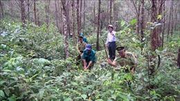 Liên kết trồng rừng để nâng cao lợi ích kinh tế cho các hộ dân