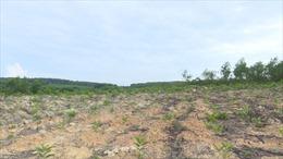Giải trình chuyển đổi mục đích sử dụng rừng sang dự án nông nghiệp công nghệ cao