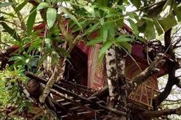 Dịch COVID-19: Tự cách ly bằng cách sống ở trên cây