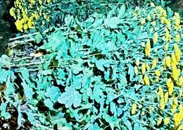 Bắt giữ đối tượng cắt trộm hơn 800 cành hoa cúc ở Đà Lạt