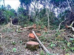 Bắc Kạn: Tự ý mở đường, khai thác rừng trái pháp luật