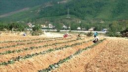 Khẩn trương khôi phụcsản xuất sau đợt mưa lũ lịch sử tại Quảng Bình