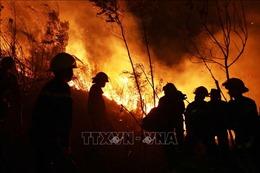 Cháy rừng tại huyện Tam Đường - Lai Châu: Lửa bùng cháy trở lại và lan rộng