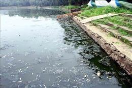 Kiểm tra, xử lý tình trạng cá chết tại hồ điều hòa Công viên trung tâm TP Vinh