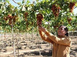 Algeria tiếp tục cấm nhập khẩu 13 loại trái cây, doanh nghiệp Việt Nam không bị ảnh hưởng