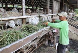 Chỉ thị của Ban Bí thư về tăng cường sự lãnh đạo đối với công tác giảm nghèo bền vững