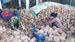 Bến Tre: Thúc đẩy cung ứng hàng hóa, tiêu thụ nông sản