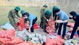Tuyên Quang hỗ trợ 350 tấn nông sản cho Hà Nội chống dịch COVID-19